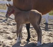 margerita-dunit-lil-ruf-rider-april-09-3-a